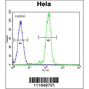 AKT2 antibody - N - terminal region (OAAB16765) in AKT2, Hela cells using Flow Cytometry
