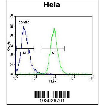AKT2 antibody - center region (OAAB16766) in AKT2, Hela cells using Flow Cytometry