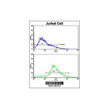 CDK2 antibody - C - terminal region (OAAB17080) in Cdk2, Jurkat cells using Flow Cytometry