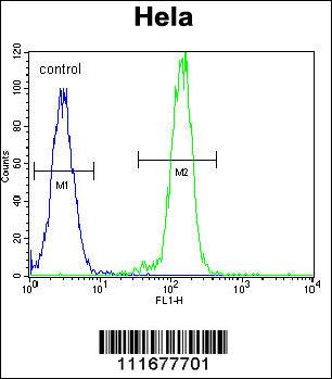 B - RAF antibody - center region (OAAB17264) in Hela cells using Flow Cytometry
