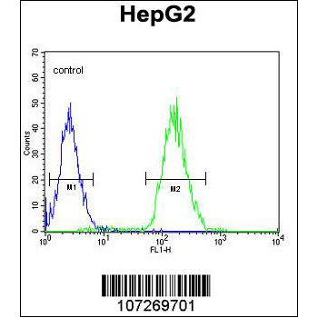 Cdc14 antibody (OAAB17606) in HepG2 cells using Flow Cytometry