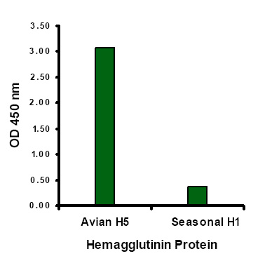 Avian Influenza Hemagglutinin Antibody (OAPB00272) in Hemagglutinin cells using Immunocytochemistry