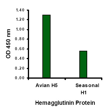 Avian Influenza Hemagglutinin Antibody (OAPB00273) in Hemagglutinin cells using Immunocytochemistry