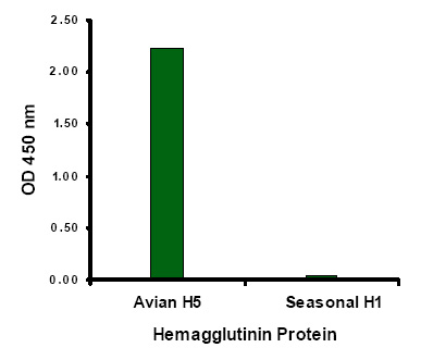 Avian Influenza Hemagglutinin 2 Antibody (OAPB00445) in Hemagglutinin cells using Immunocytochemistry