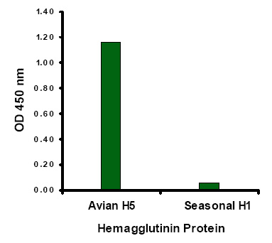 Avian Influenza Hemagglutinin 1 Antibody (OAPB00450) in Hemagglutinin cells using Immunocytochemistry