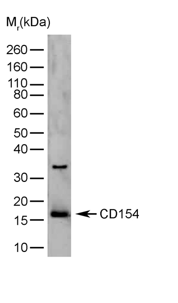 CD40LG Antibody (OASA04591) in  cells using Flow Cytometry