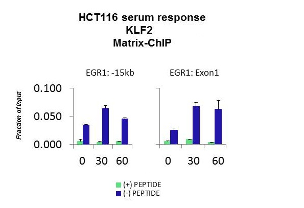 KLF2 antibody - middle region (ARP32760_P050) in HCT116 using CHIP
